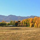 Michelago Autumn by Tim Coleman
