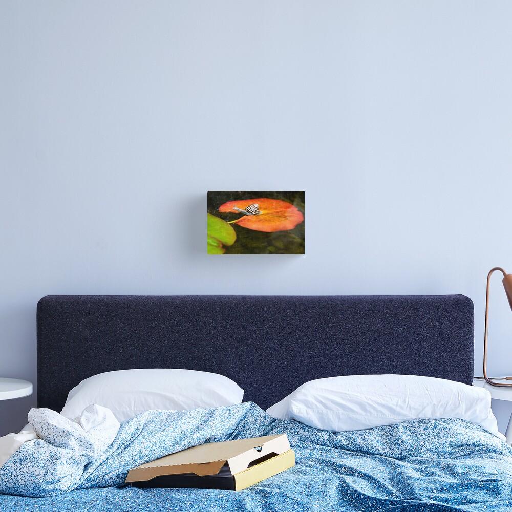 Snail on Lilypad Canvas Print
