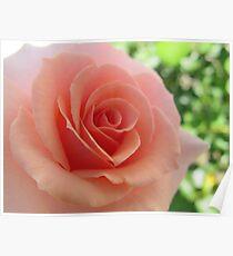 Florid Rose Poster