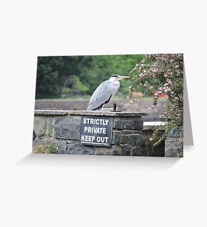 Herons Don't Read Greeting Card