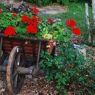 A garden in France by julie08