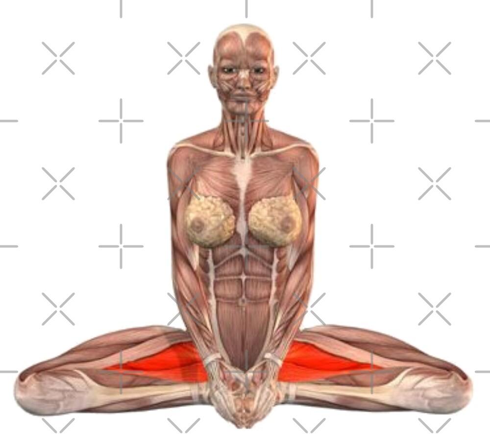 « Positions de yoga musculo-squelettique » par rodolphe Augusto