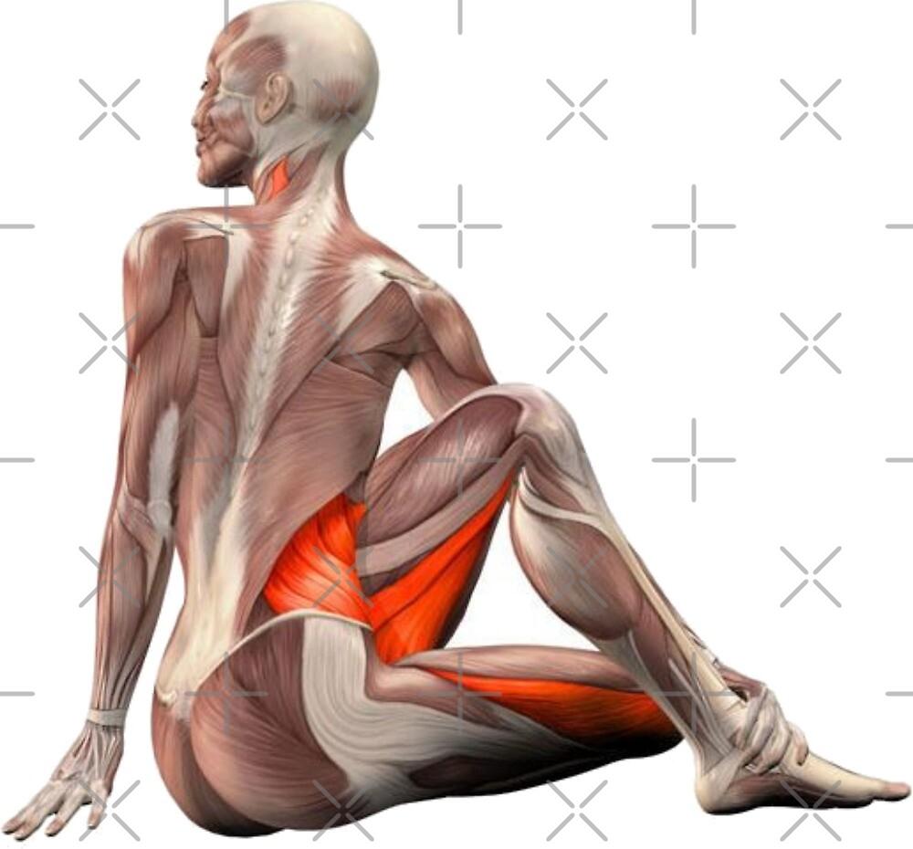 « Dessins Musculo-squelettique des positions de Yoga » par rodolphe Augusto