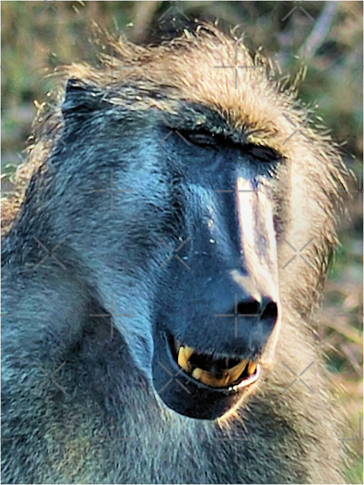 WHAT'S SO FUNNY! - CHACMA BABOON – Papio ursinus by Magriet Meintjes