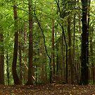 Poniky forest by Marek Novotnak