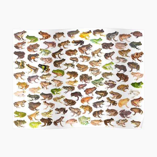 101 Frogs of Madagascar, First Edition Poster