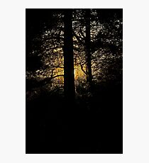 7 star ******* Lappland sunset - Sweden. Brown Sugar Story. Photographic Print