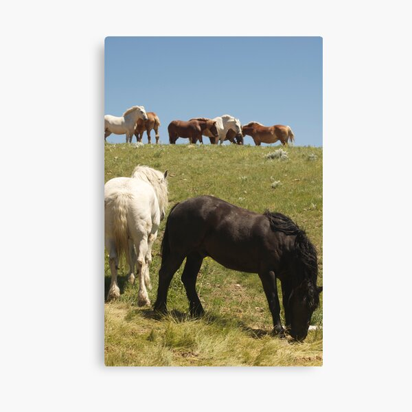 Eight is enough? Canvas Print