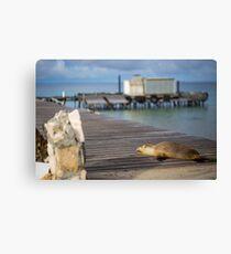 Abrolhos Islands, Western Australia Canvas Print