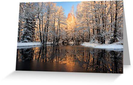 Reflection trees with sunlight by Romeo Koitmäe