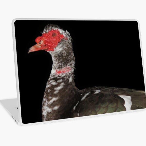 Muscovy duck Laptop Skin