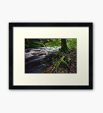 Tree roots in forest Framed Print