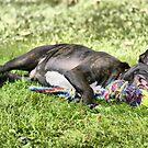 Let Sleeping Dogs Lie......... by Sandra Cockayne