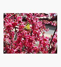 Small Yellow Bird In A Tree Photographic Print