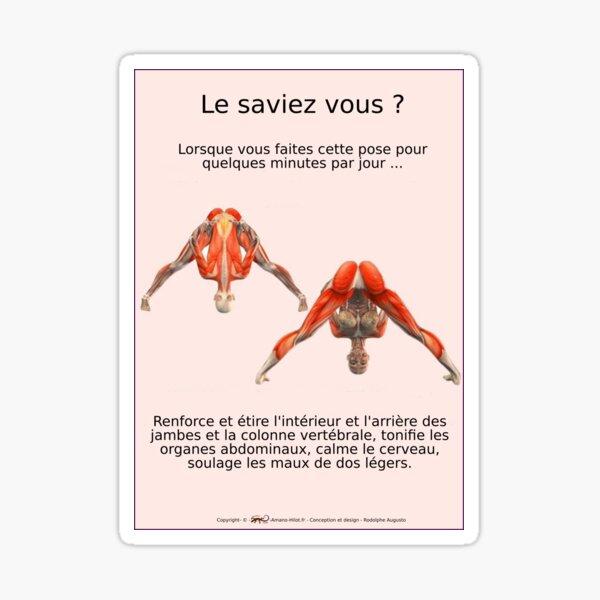Planches Musculo-squelettique des positions de Yoga - N°3 Sticker