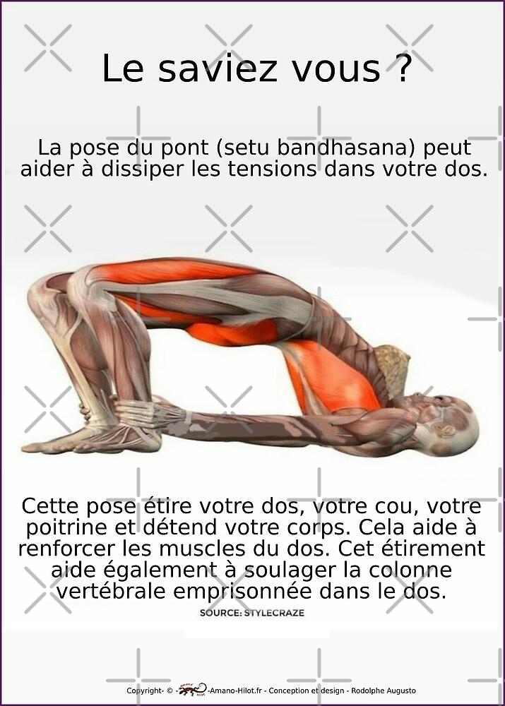 « Planches Musculo-squelettique des positions de Yoga - N°4 » par rodolphe Augusto
