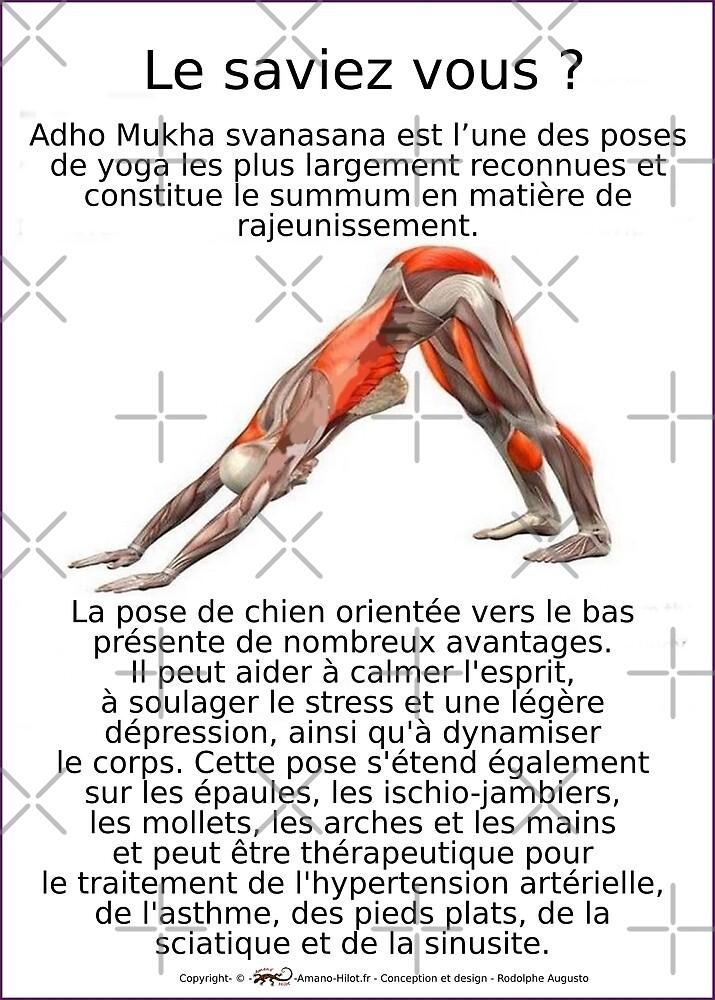« Planches Musculo-squelettique des positions de Yoga - N°5 » par rodolphe Augusto