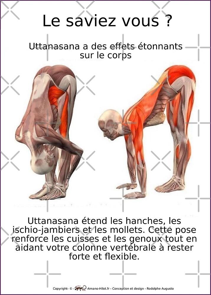 « Planches Musculo-squelettique des positions de Yoga - N°7 » par rodolphe Augusto