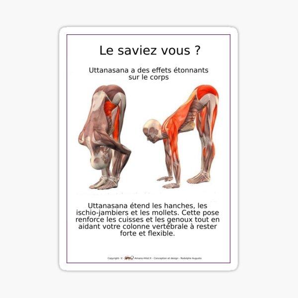 Planches Musculo-squelettique des positions de Yoga - N°7 Sticker