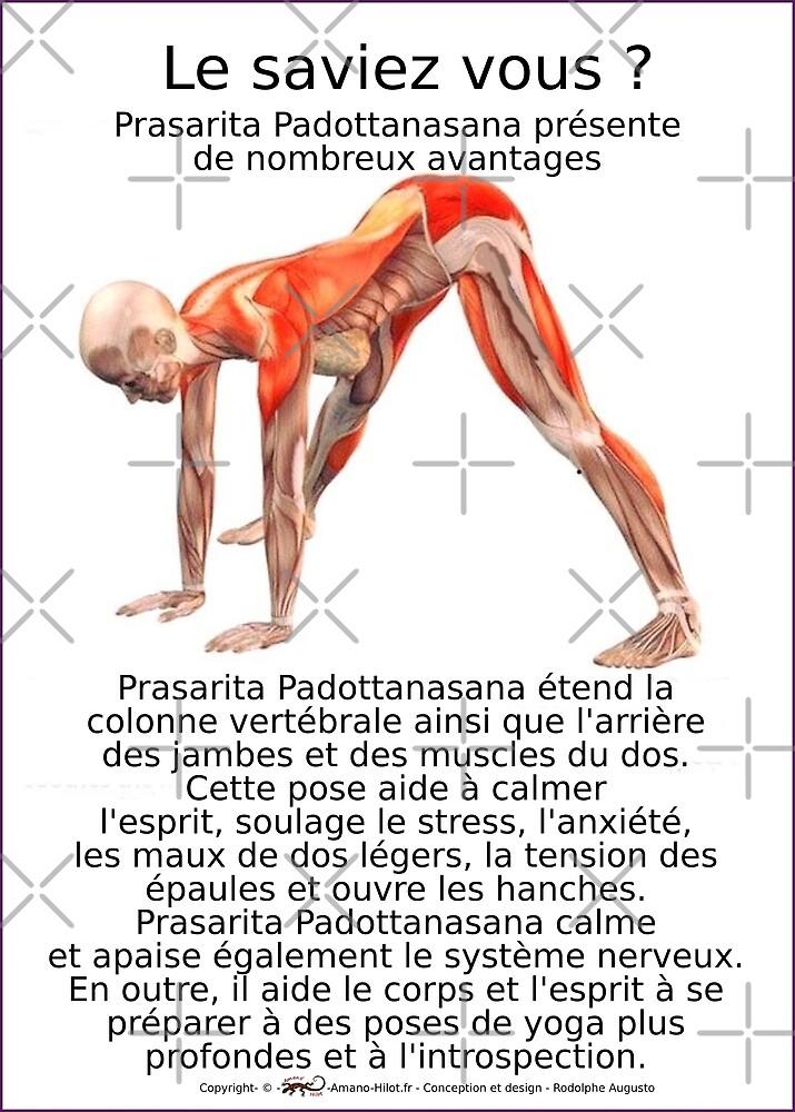 « Planches Musculo-squelettique des positions de Yoga - N°10 » par rodolphe Augusto