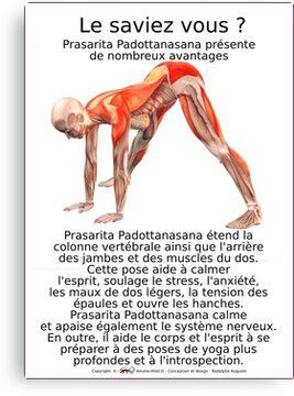 Planches Musculo-squelettique des positions de Yoga - N°10