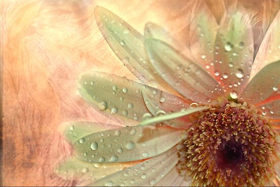 """""""Daisy Dreamer ..."""" by Rosehaven"""