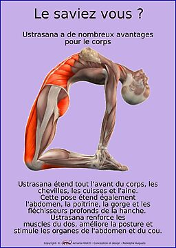 Planches Musculo-squelettique des positions de Yoga - N°1