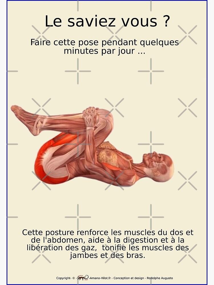 «Planches Musculo-squelettique des positions de Yoga - N°24» par rodolphe-a