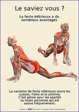 Planches Musculo-squelettique des positions de Yoga - N°25