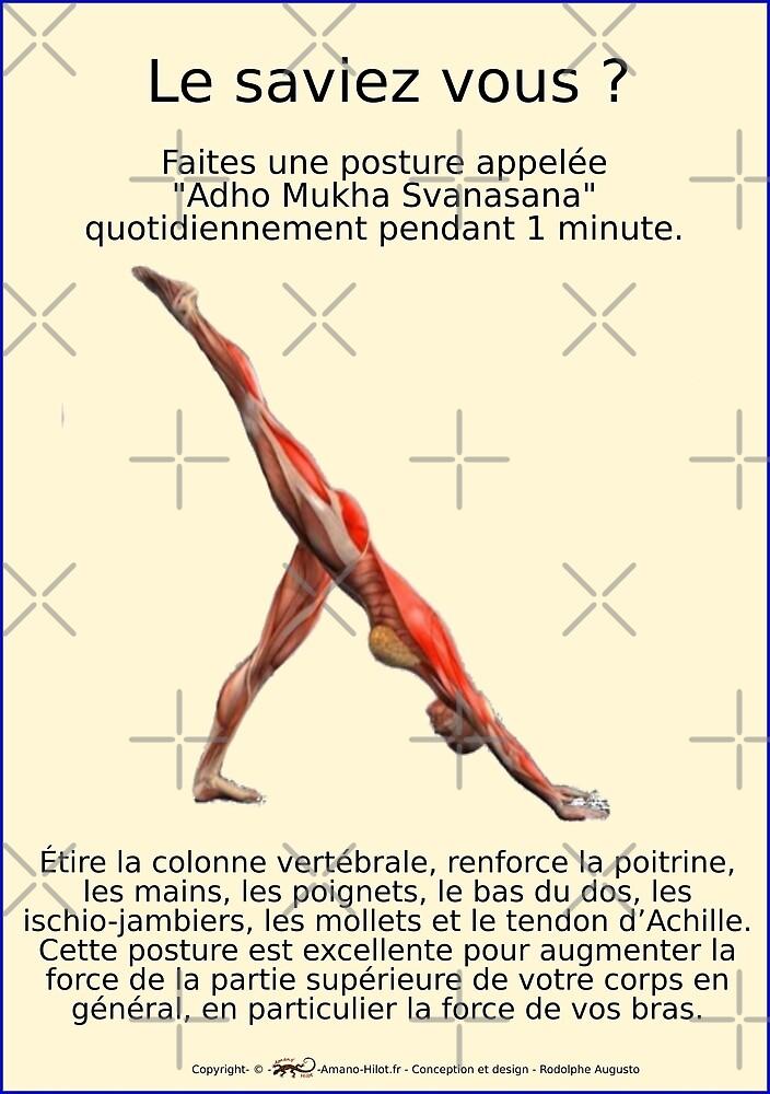 « Planches Musculo-squelettique des positions de Yoga - N°27 » par rodolphe Augusto