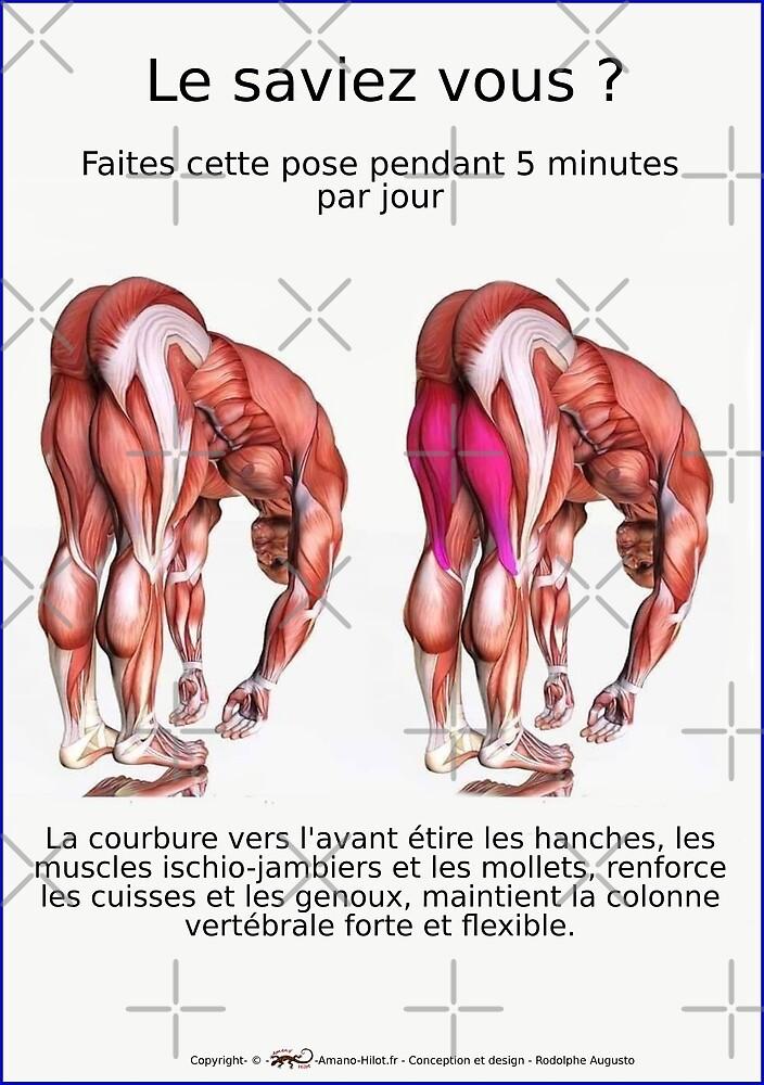 « Planches Musculo-squelettique des positions de Yoga - N°30 » par rodolphe Augusto