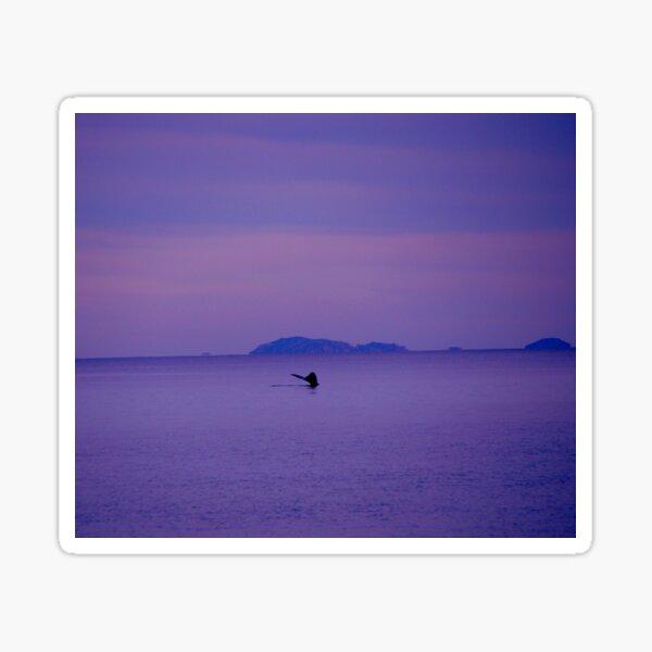 Whale Tale in Purple Dusk Sticker