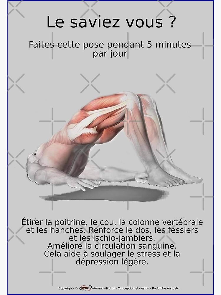 «Planches Musculo-squelettique des positions de Yoga - N°31» par rodolphe-a
