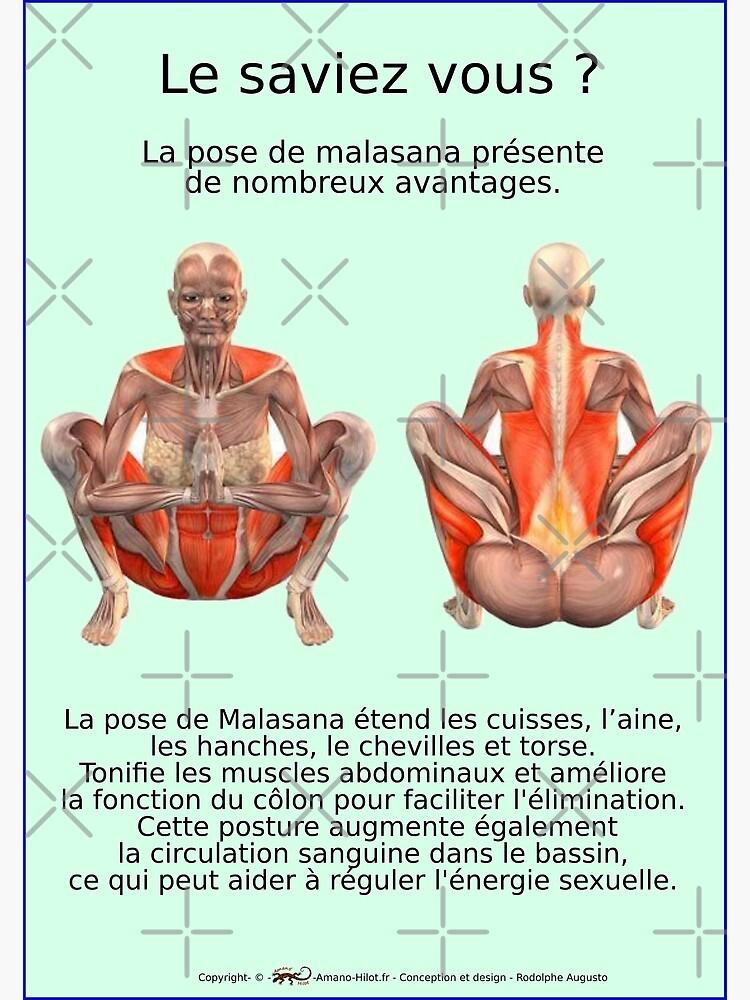 «Planches Musculo-squelettique des positions de Yoga - N°34» par rodolphe-a