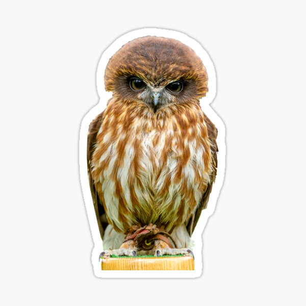 Billy the Boobook Owl Sticker