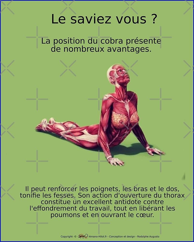 « Planches Musculo-squelettique des positions de Yoga - N°36 » par rodolphe Augusto