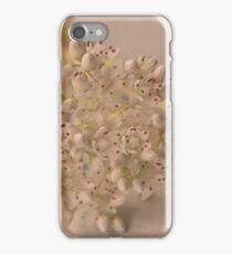 Albus iPhone Case/Skin
