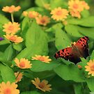 Question Mark in the Garden by Lisa Putman
