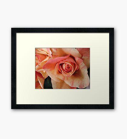 COLOR SPLASH ROSES Framed Print