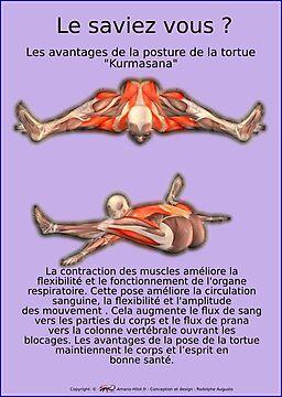 Planches Musculo-squelettique des positions de Yoga - N°39