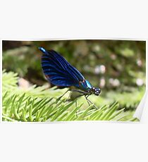 Blue wings Dragonfly Poster