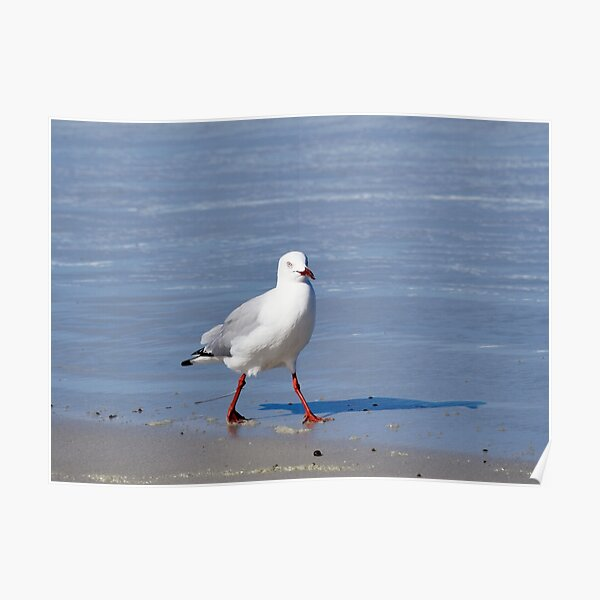Seagull  and its Shadow Poster