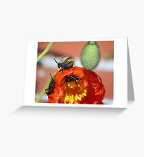Grass Hoppers Greeting Card