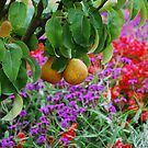Fruits and flowers by julie08