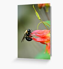 Bee... Greeting Card