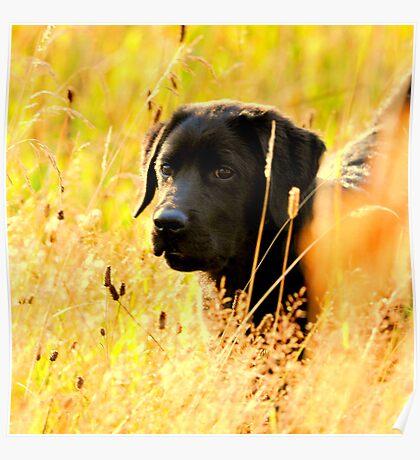Puppy days Poster