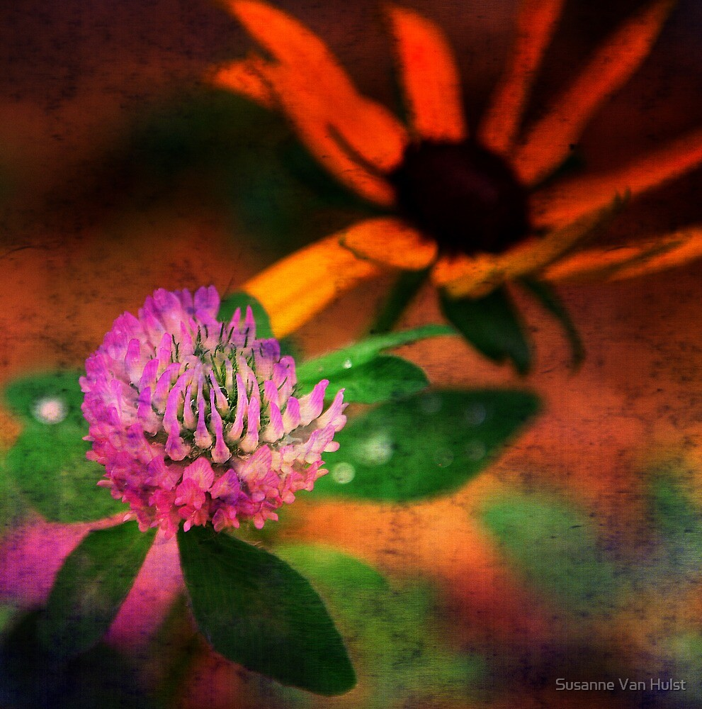 One Little Clover by Susanne Van Hulst