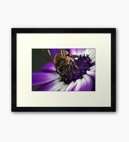 Bee in the Midst.  Framed Print