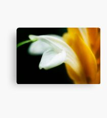 Macro Flower Canvas Print