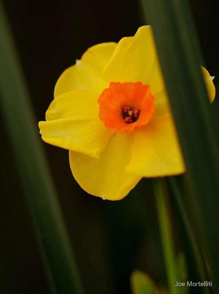 A Sunny Yellow by Joe Mortelliti